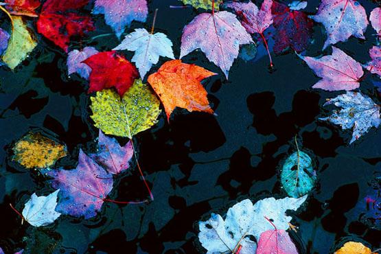 AutumnPuddle