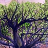 Michael McManmom Tree